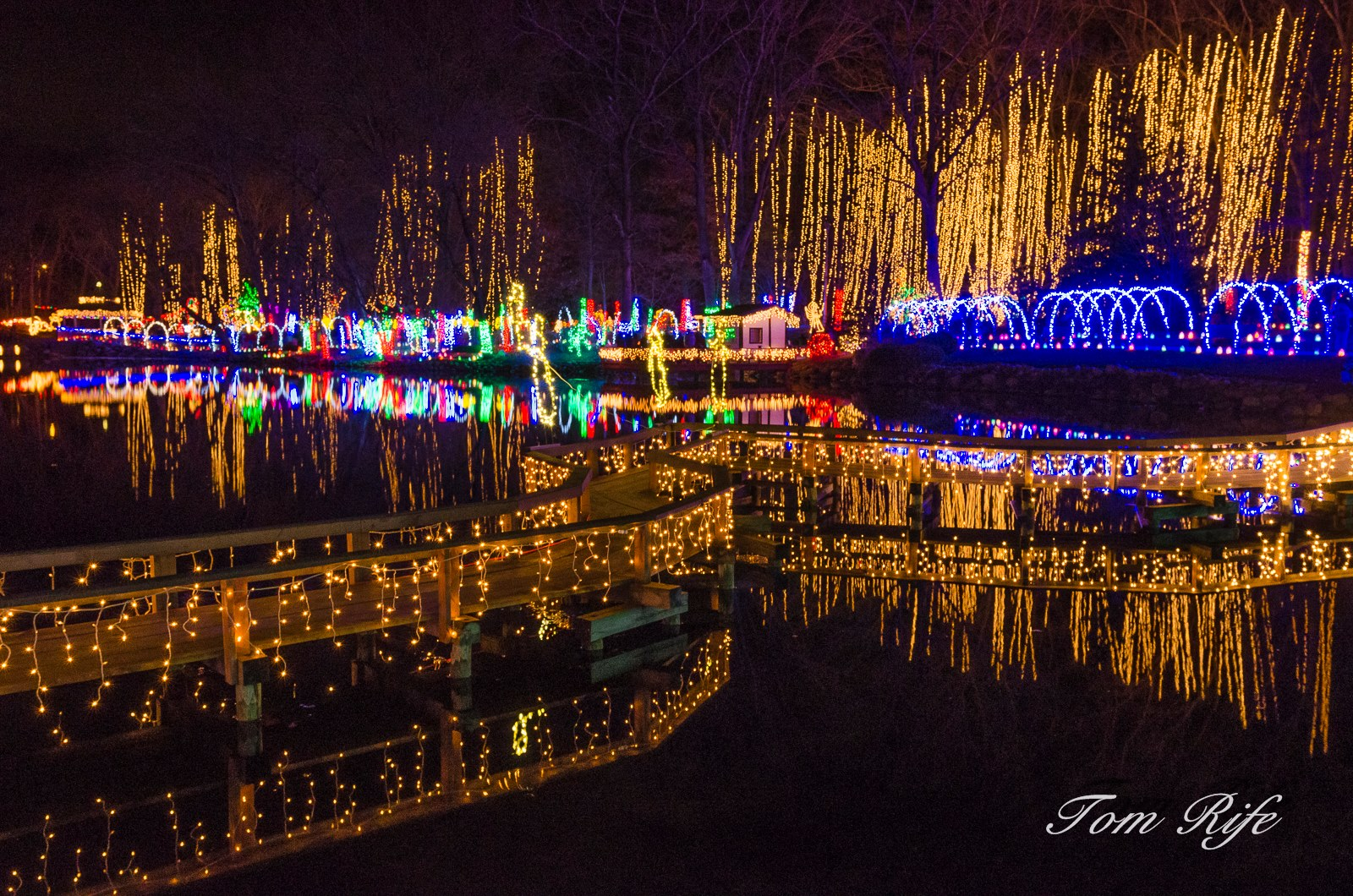 Botanical Garden Christmas Lights - Christmas Cards