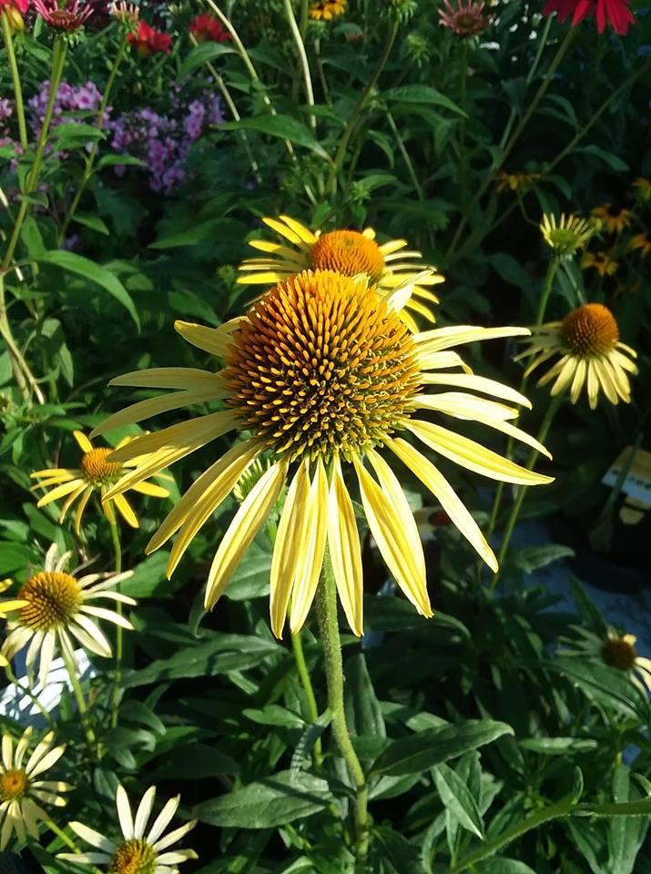 Plant Sale Preparations & Member Sale - Rotary Botanical Gardens