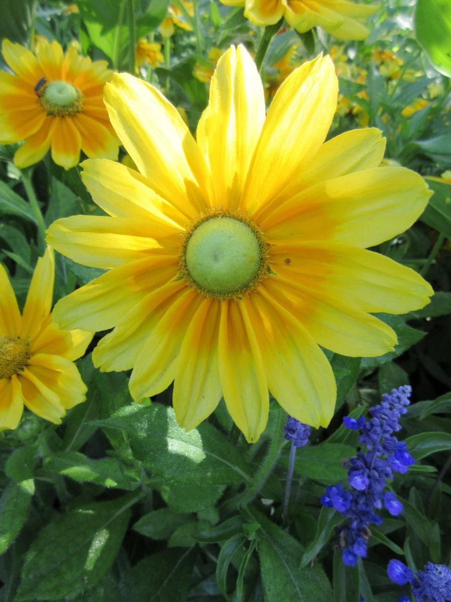 Peak Summer Color Has Arrived Rotary Botanical Gardens