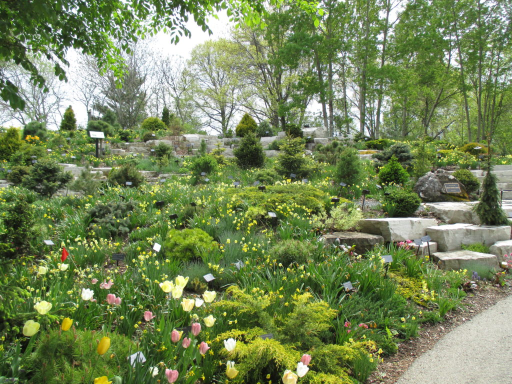 Awesome Awesome Conifer Garden (above)