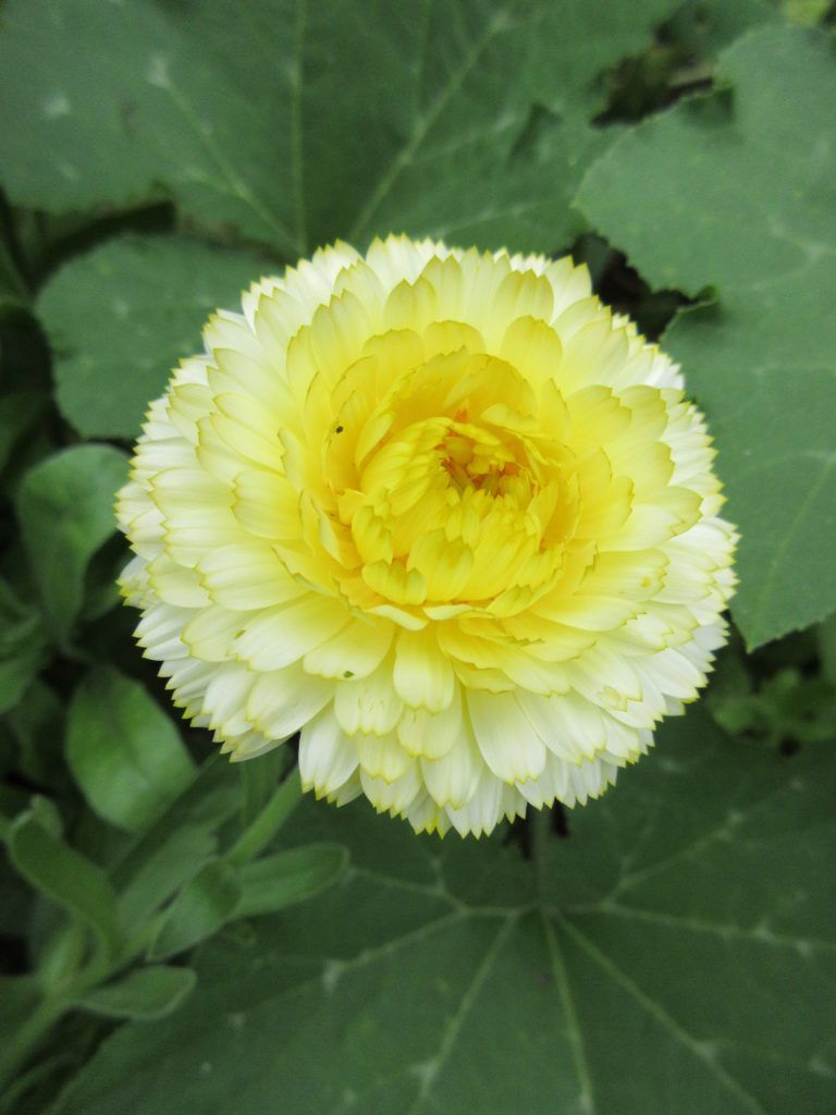 August Sunshine Rotary Botanical Gardens