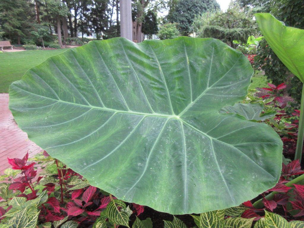 Plant Sale Looms! - Rotary Botanical Gardens