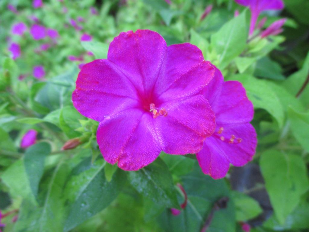 A Rainy Start Rotary Botanical Gardens