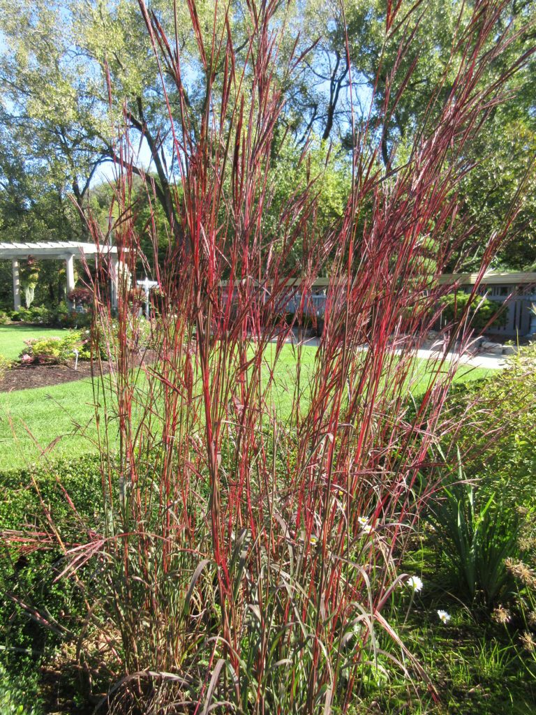 Summer Color Persists! - Rotary Botanical Gardens