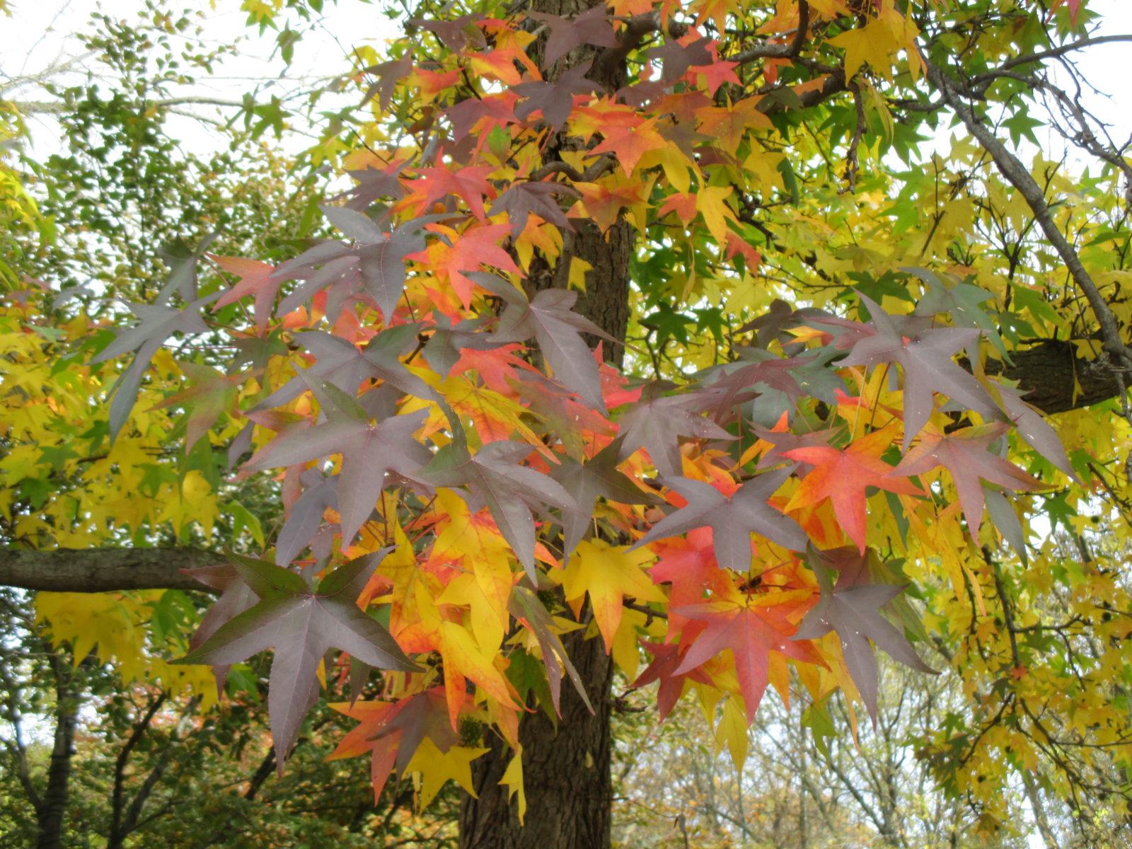 Shorts In November? - Rotary Botanical Gardens