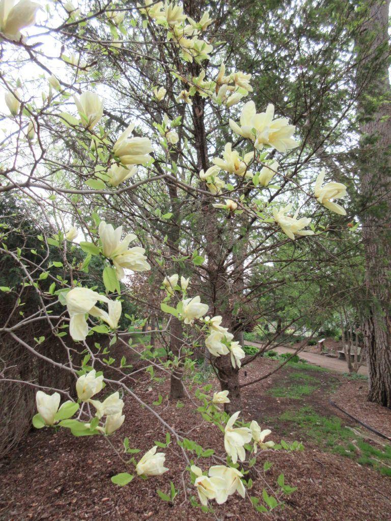Abundant Sunshine Rotary Botanical Gardens