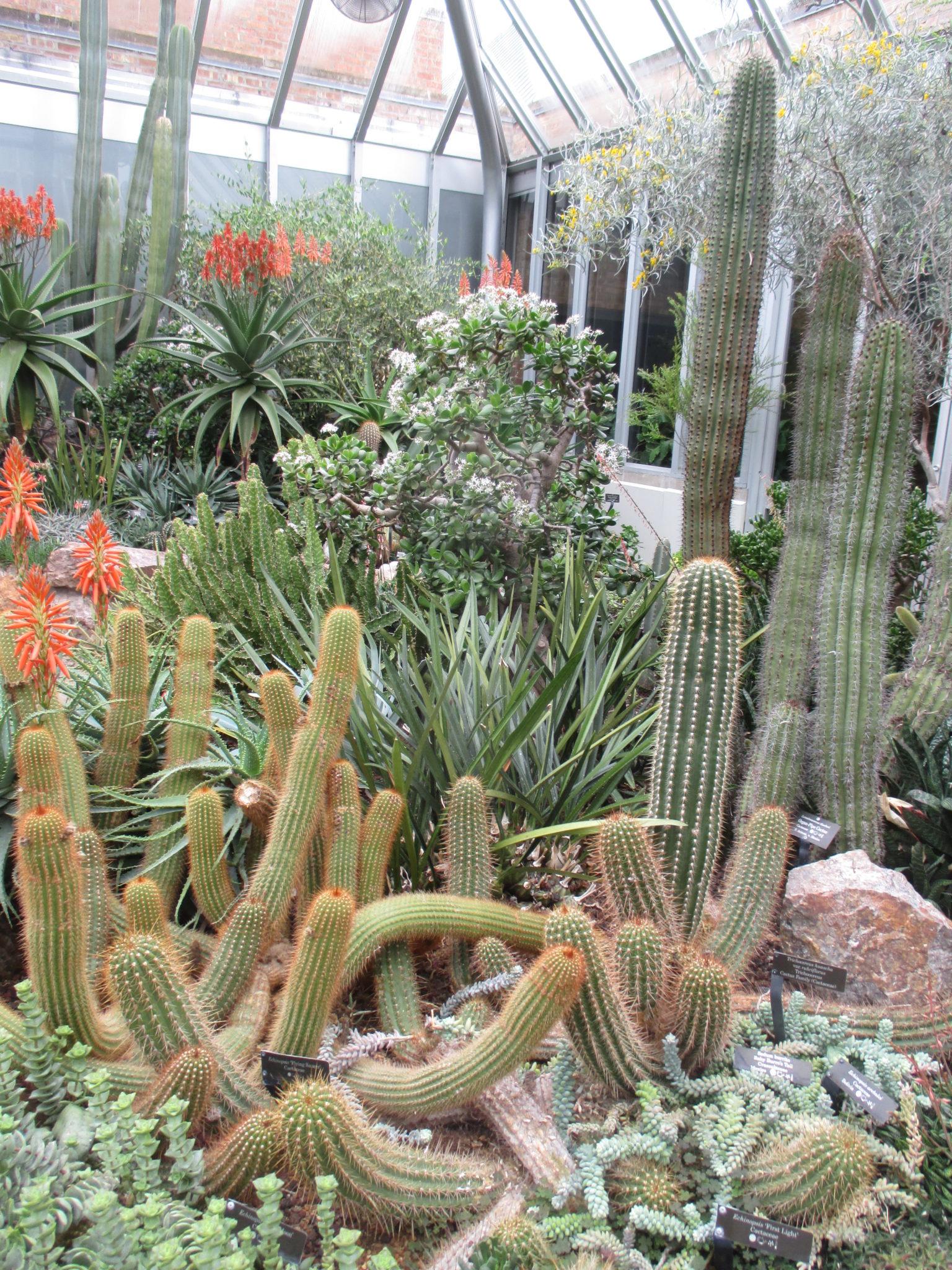 Chicago botanic garden rotary botanical gardens for Chicago botanic garden membership