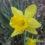 Maddox Brings Spring