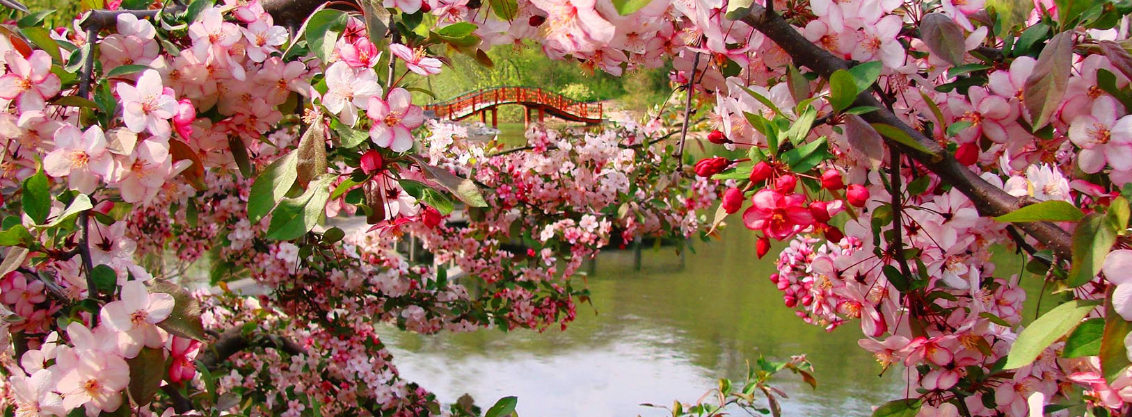 rbg-slider-flowers-bridge